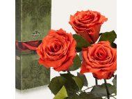 Подобрать Стабилизированные цветы для любимой Женщины